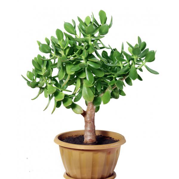 10 loại cây phong thuỷ trong nhà nên trồng để chiêu tài lộc, kích vận khí cho gia đình bạn